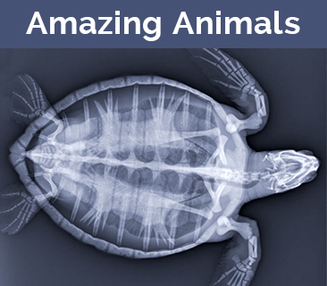 Two views of animal medical images