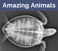 Amazing medical images of animals